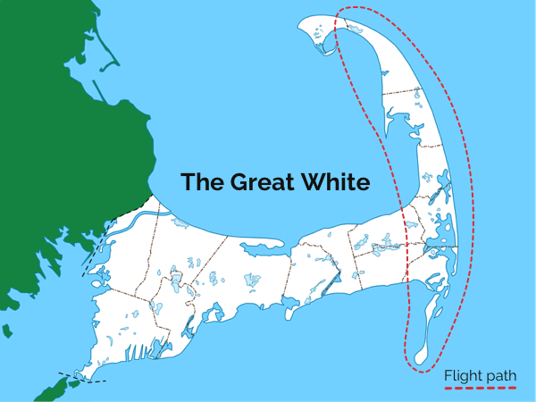 great white airplane tour